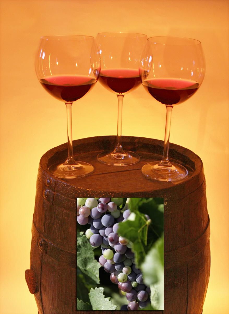 Weinprobe Strecker